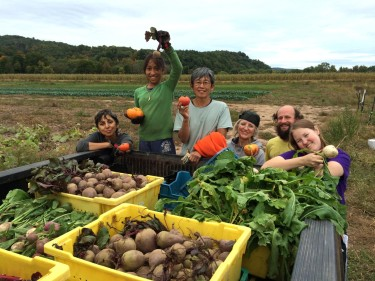 Gleaning for local food pantries at Whirligig Farm, 2014